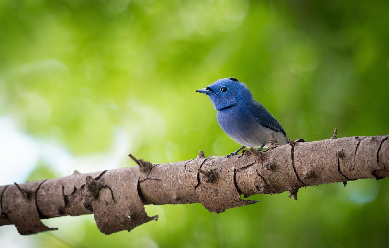 Photo wallpaper tree, bird, bokeh