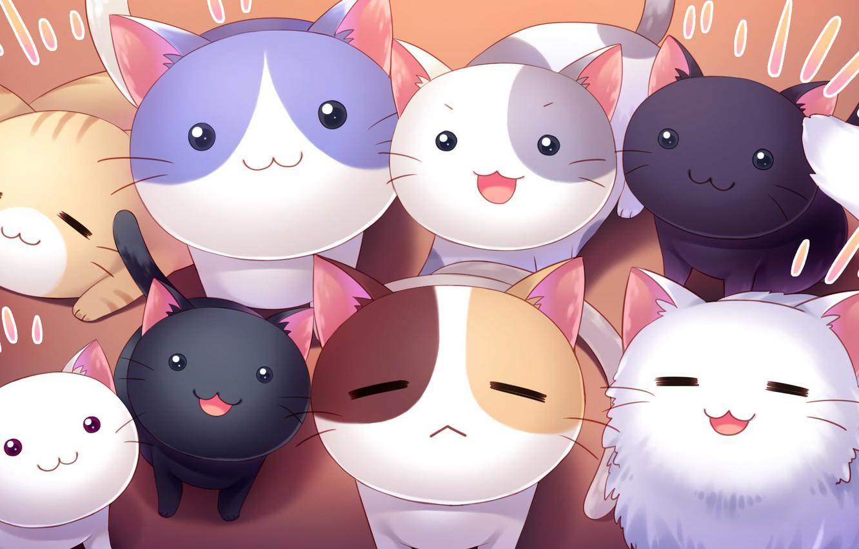 Photo wallpaper kittens, cuties, seals, nyashki, Nyan Cafe Macchiato