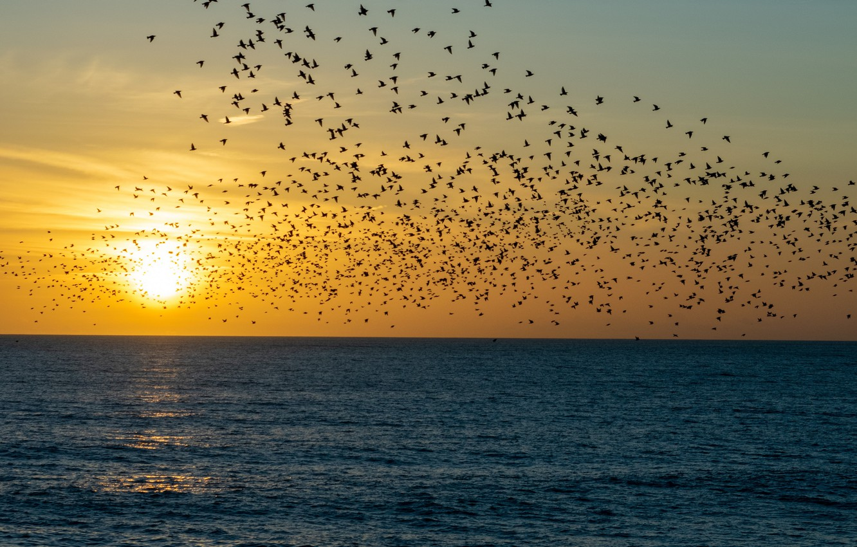 Photo wallpaper sea, the sun, sunset, birds, nature, pack, flight