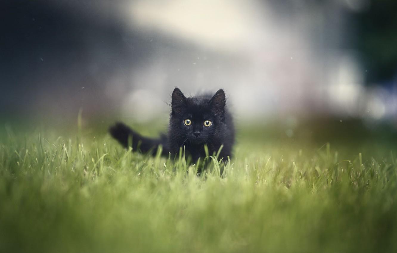 Photo wallpaper grass, kitty, grass, kitten, Анна Яркова