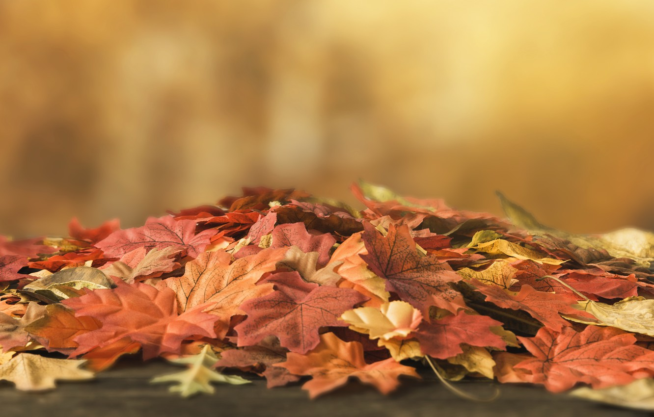 Photo wallpaper autumn, leaves, background, tree, colorful, wood, background, autumn, leaves, autumn, maple