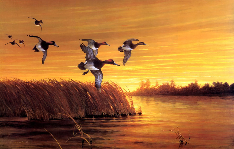Photo wallpaper autumn, the sky, grass, flight, sunset, birds, nature, river, shore, figure, duck, pack, picture, art, …