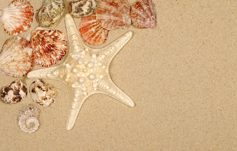 Photo wallpaper sand, beach, summer, shell, summer, beach, sea, sand, starfish, seashells
