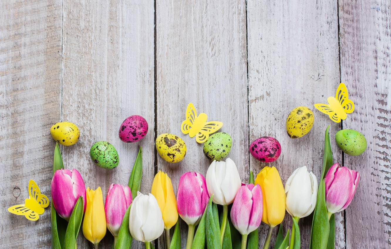 Photo wallpaper flowers, eggs, colorful, Easter, tulips, happy, pink, flowers, tulips, Easter, eggs