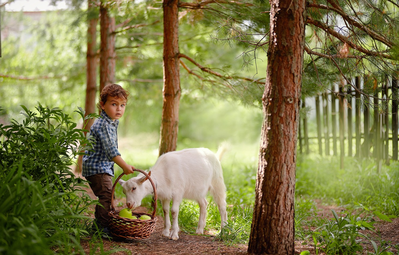 Photo wallpaper summer, trees, nature, animal, basket, apples, the fence, boy, baby, child, goat, The Podkovyrov Constantine