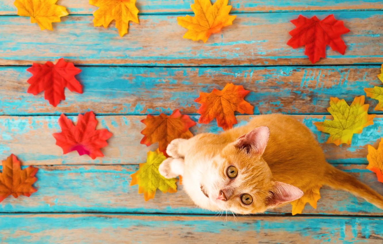 Photo wallpaper autumn, cat, leaves, background, tree, colorful, vintage, wood, cat, background, autumn, leaves, maple