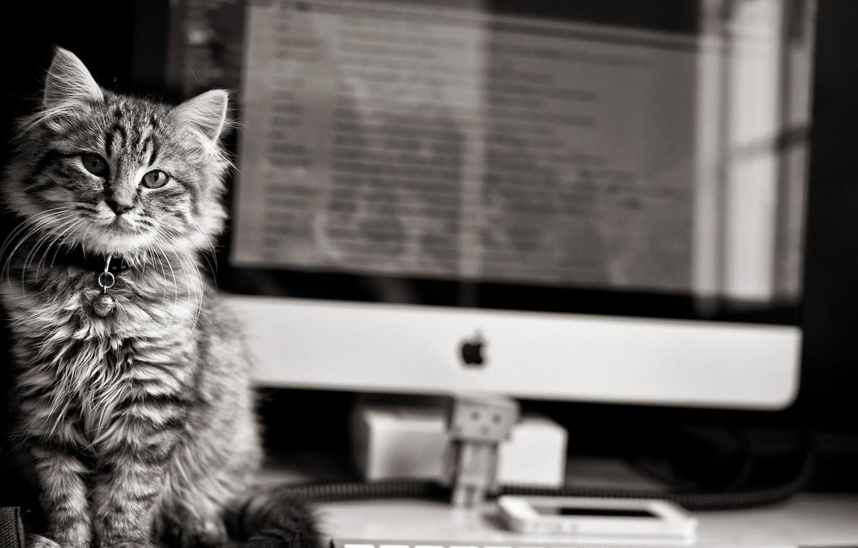 Photo wallpaper black & white, Apple, eyes, computer, monochrome, Cat, animal, b&w, fur, pawn, whiskers, feline, cat …