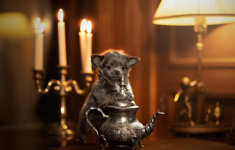 Photo wallpaper kettle, puppy, baby