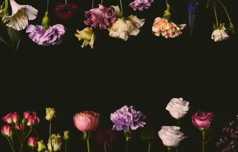 Wallpaper Flowers Roses Colorful Black Background Black Flowers Background Roses Clove Images For Desktop Section Cvety Download