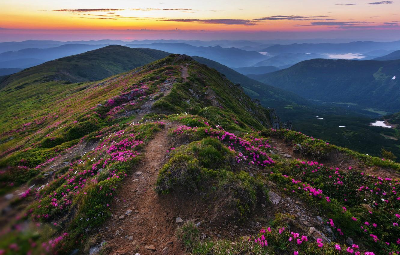 Photo wallpaper flowers, hills, the evening