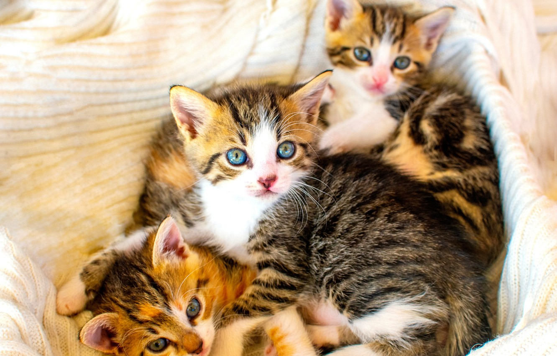 Photo wallpaper kittens, kids, trio, Trinity