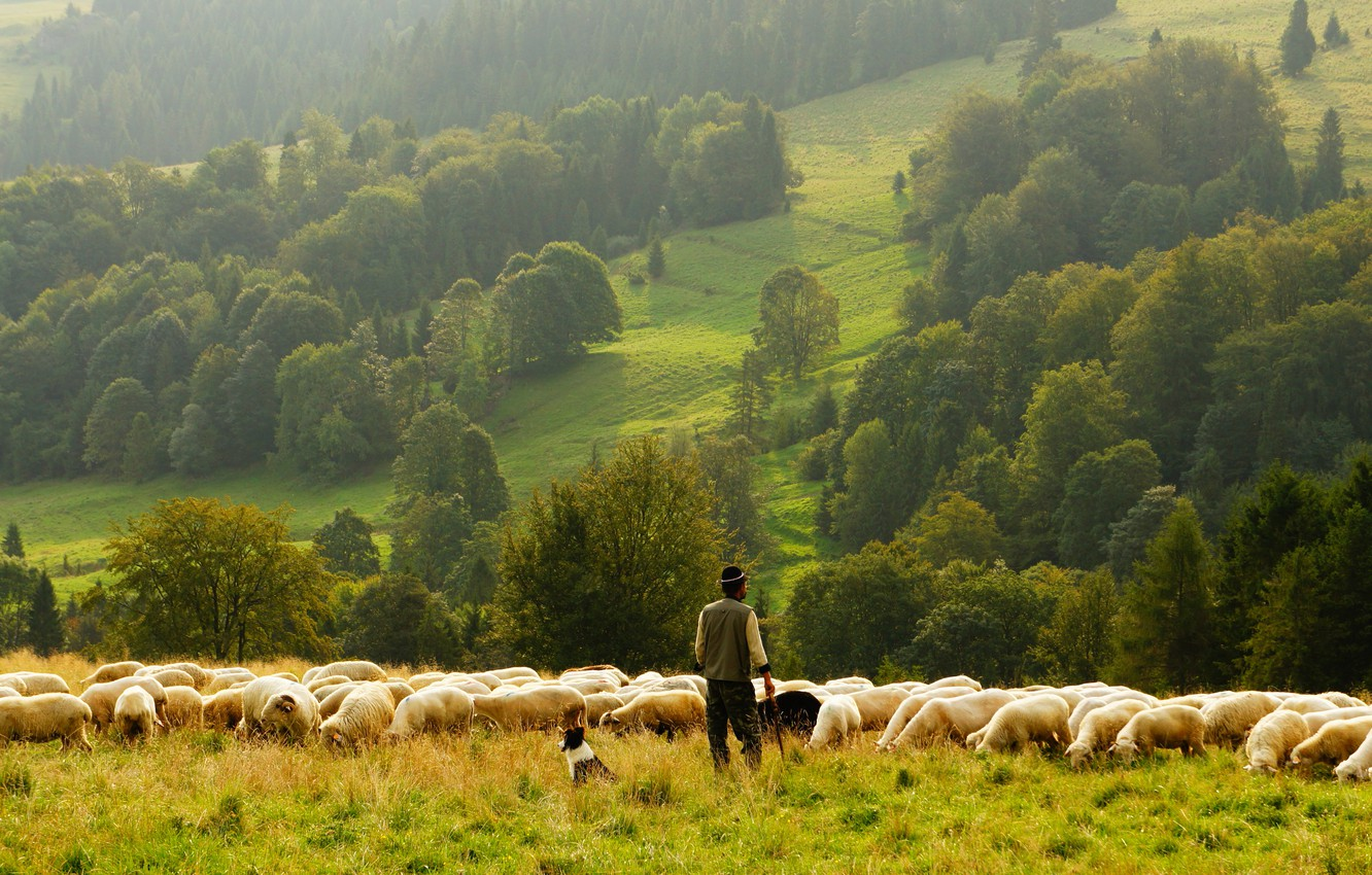 Photo wallpaper greens, field, forest, summer, grass, trees, fog, hills, back, people, view, sheep, dog, morning, slope, …
