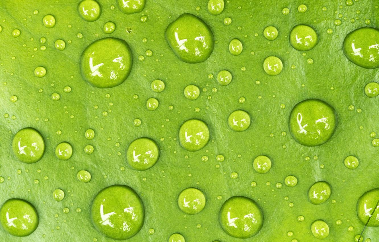 Photo wallpaper water, drops, sheet, Macro