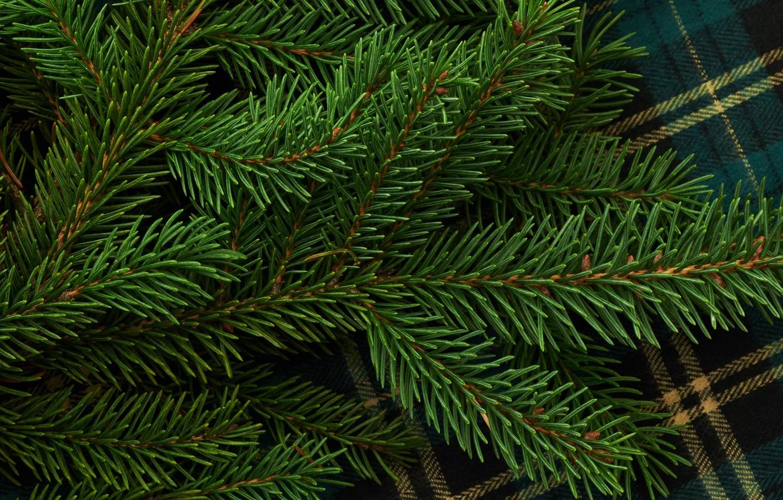 Photo wallpaper needles, branch, green, needles, tablecloth