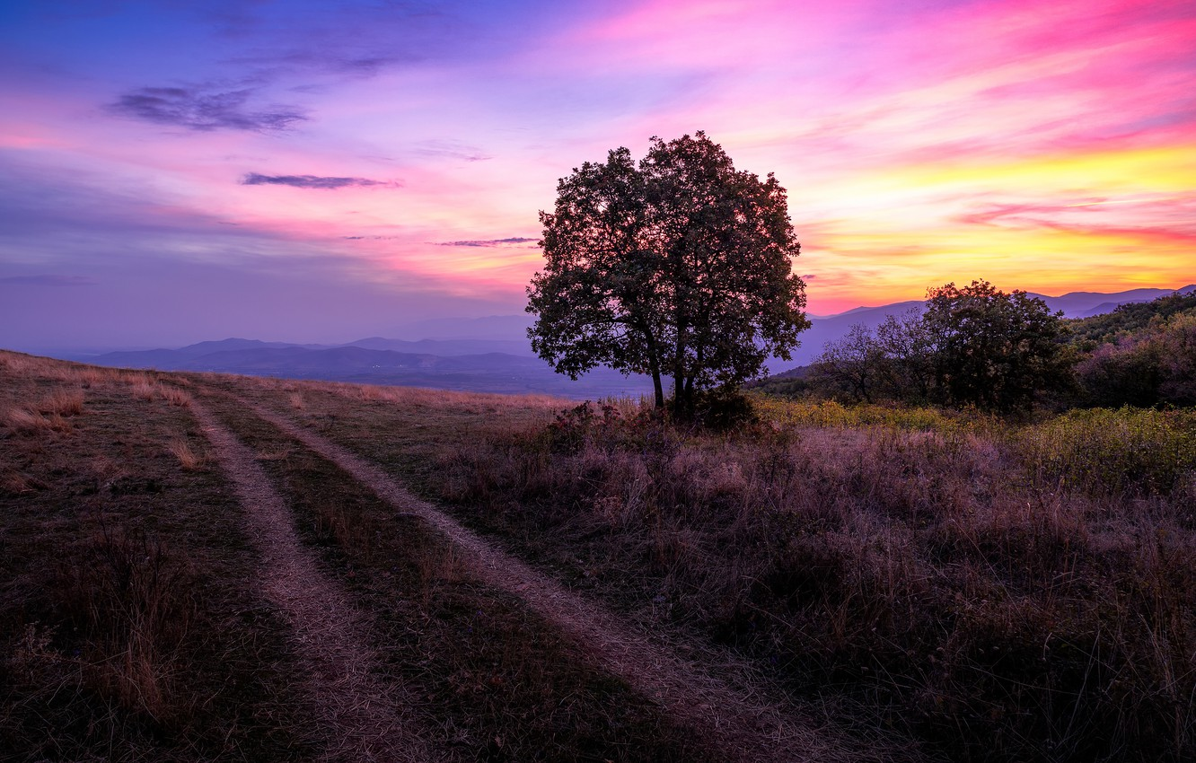 Photo wallpaper road, grass, sunset, mountains, the way, tree, hills, dal, the evening, haze, track, twilight, sunset …