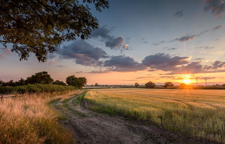 Photo wallpaper Sunset, Field, Road