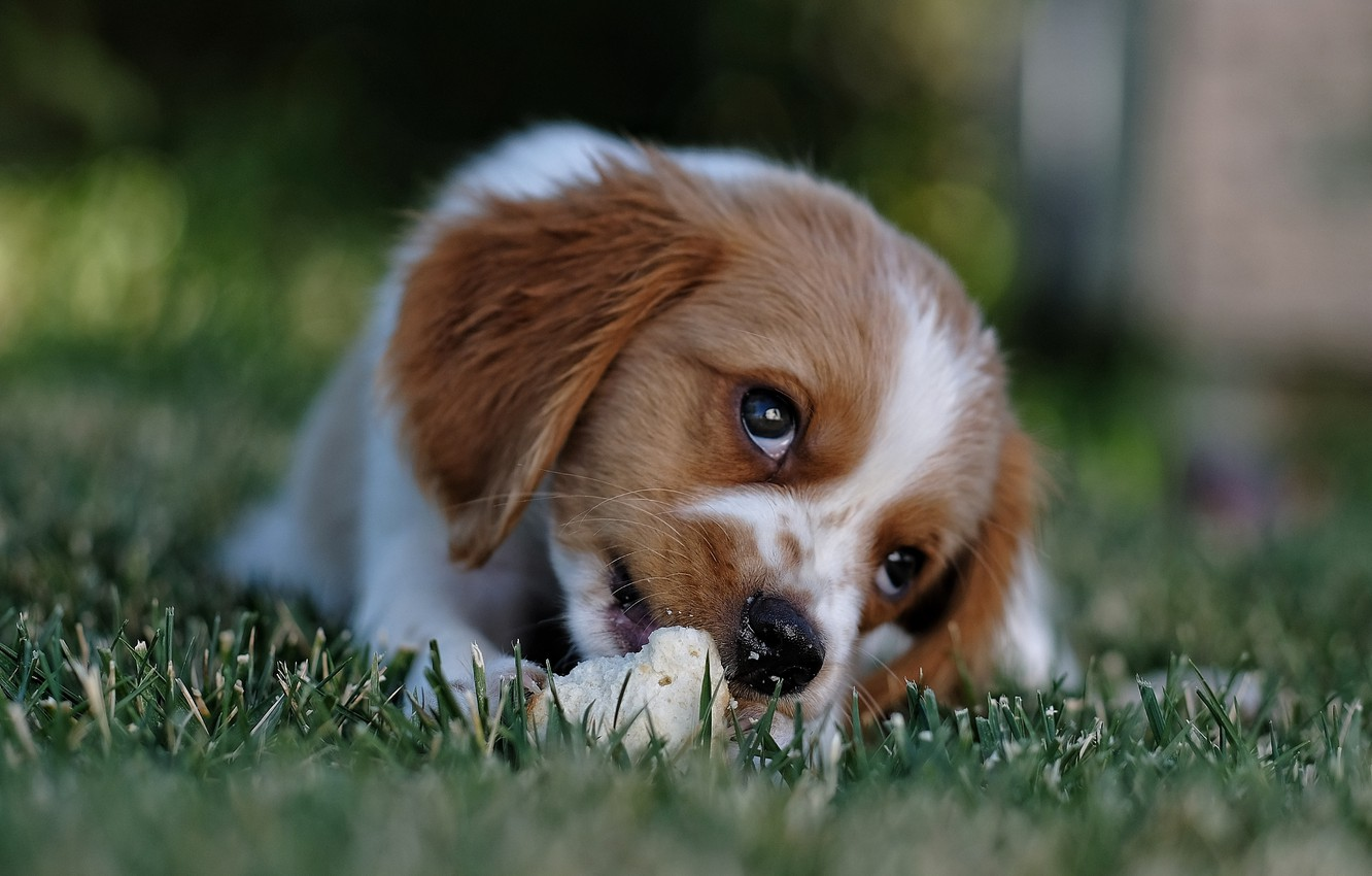 Photo wallpaper grass, look, face, nature, animal, dog, bread, puppy, cub, dog