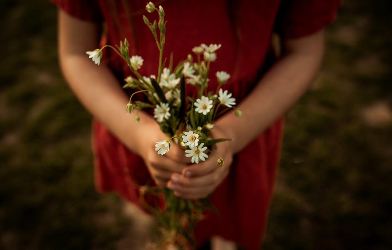 Photo wallpaper girl, flowers, chamomile