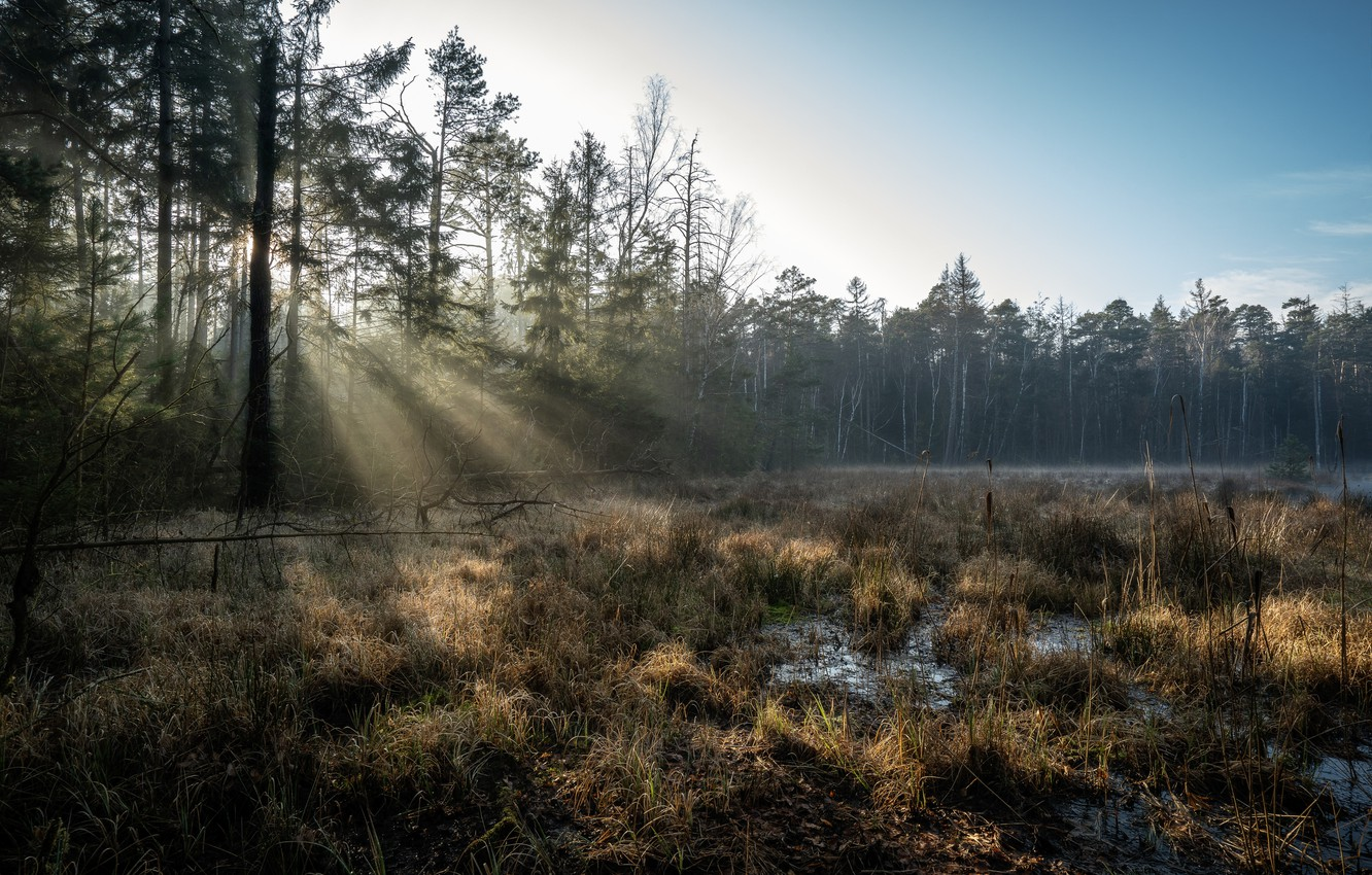 Photo wallpaper forest, swamp, morning, Germany, Large dittmannsdorf