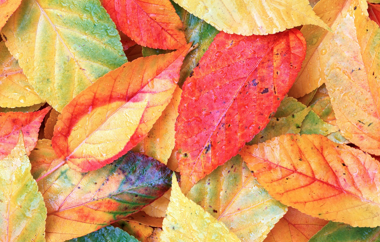 Photo wallpaper autumn, leaves, background, colorful, background, autumn, leaves, autumn