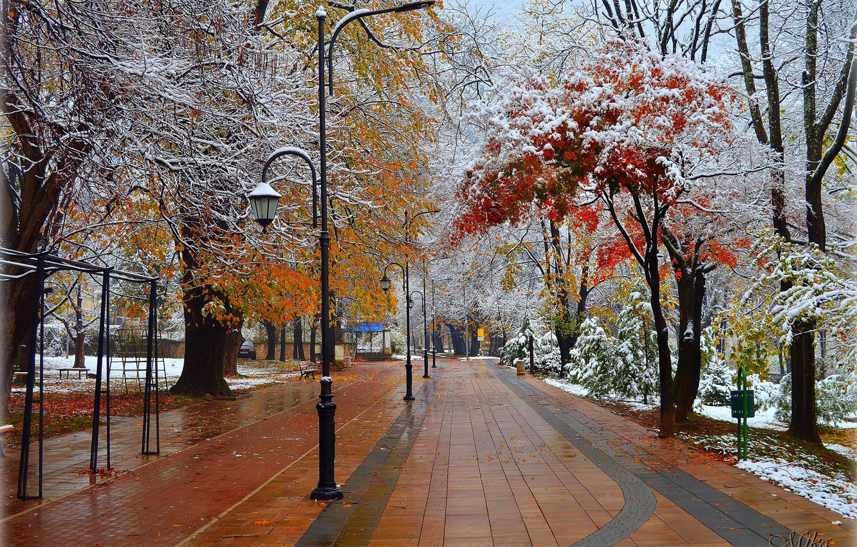 Photo wallpaper Trees, Snow, Park, Park, Snow, Trees