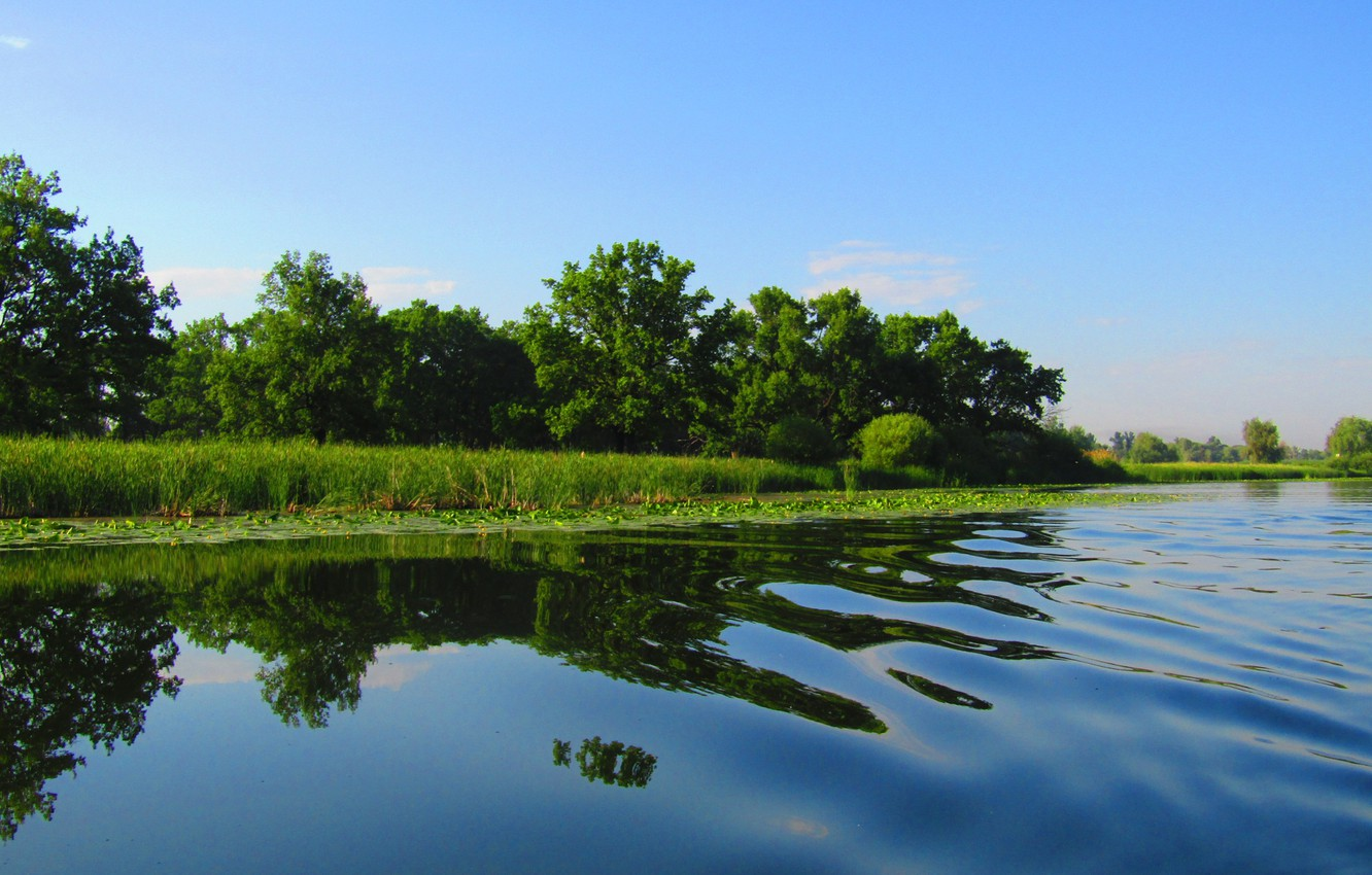 Photo wallpaper greens, summer, the sky, water, trees, river, wave, reed, the sky in the water