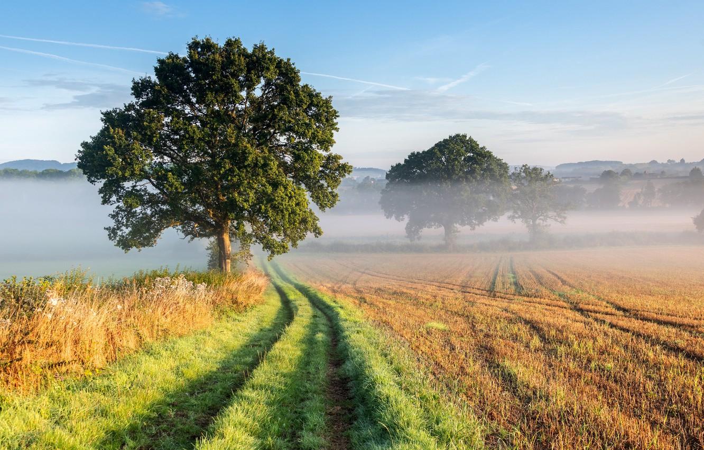 Photo wallpaper grass, sky, trees, landscape, nature, mist, Field