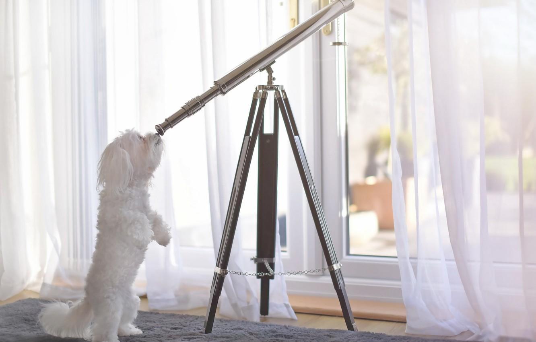 Photo wallpaper each, dog, telescope