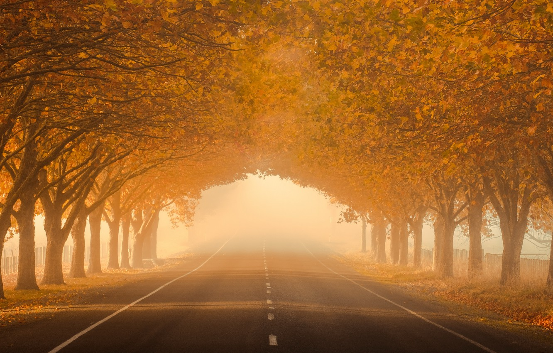 Photo wallpaper road, autumn, fog