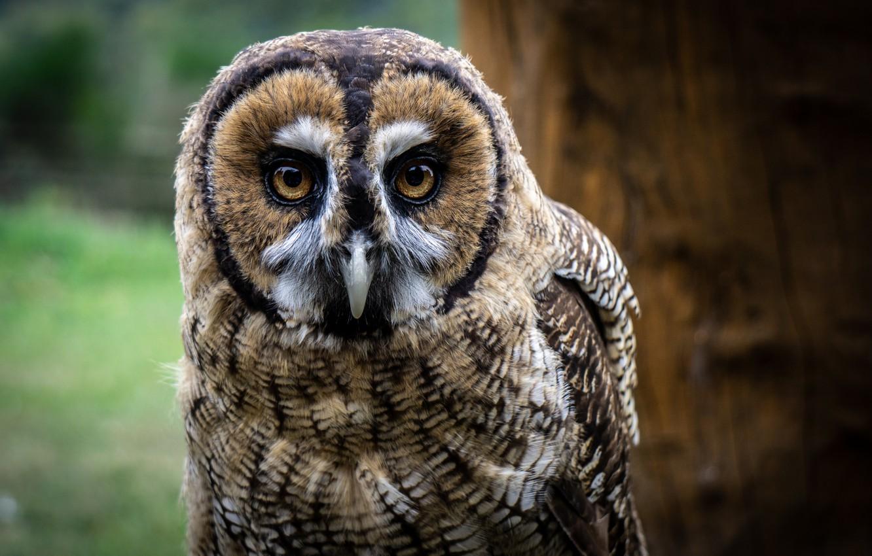 Photo wallpaper look, owl, bird, bokeh