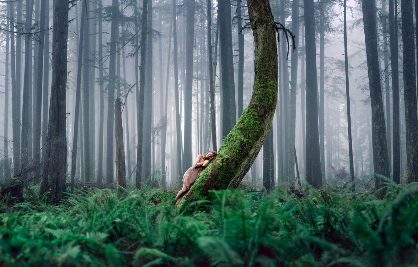 Photo wallpaper forest, girl, nature