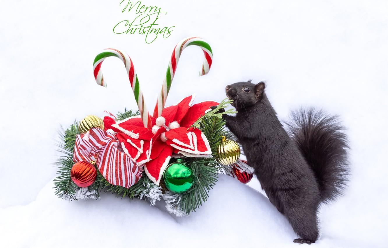 Photo wallpaper protein, Christmas, white background, New year, Christmas wreath