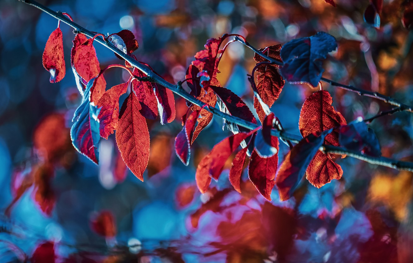 Photo wallpaper autumn, leaves, light, branches, blue, nature, background, bright, blur, branch, red, bokeh, autumn, autumn leaves, …