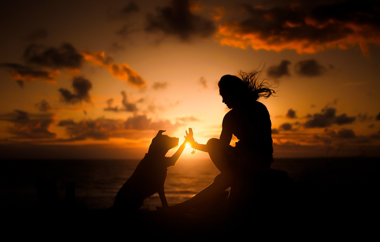 Photo wallpaper sunset, people, dog, friends