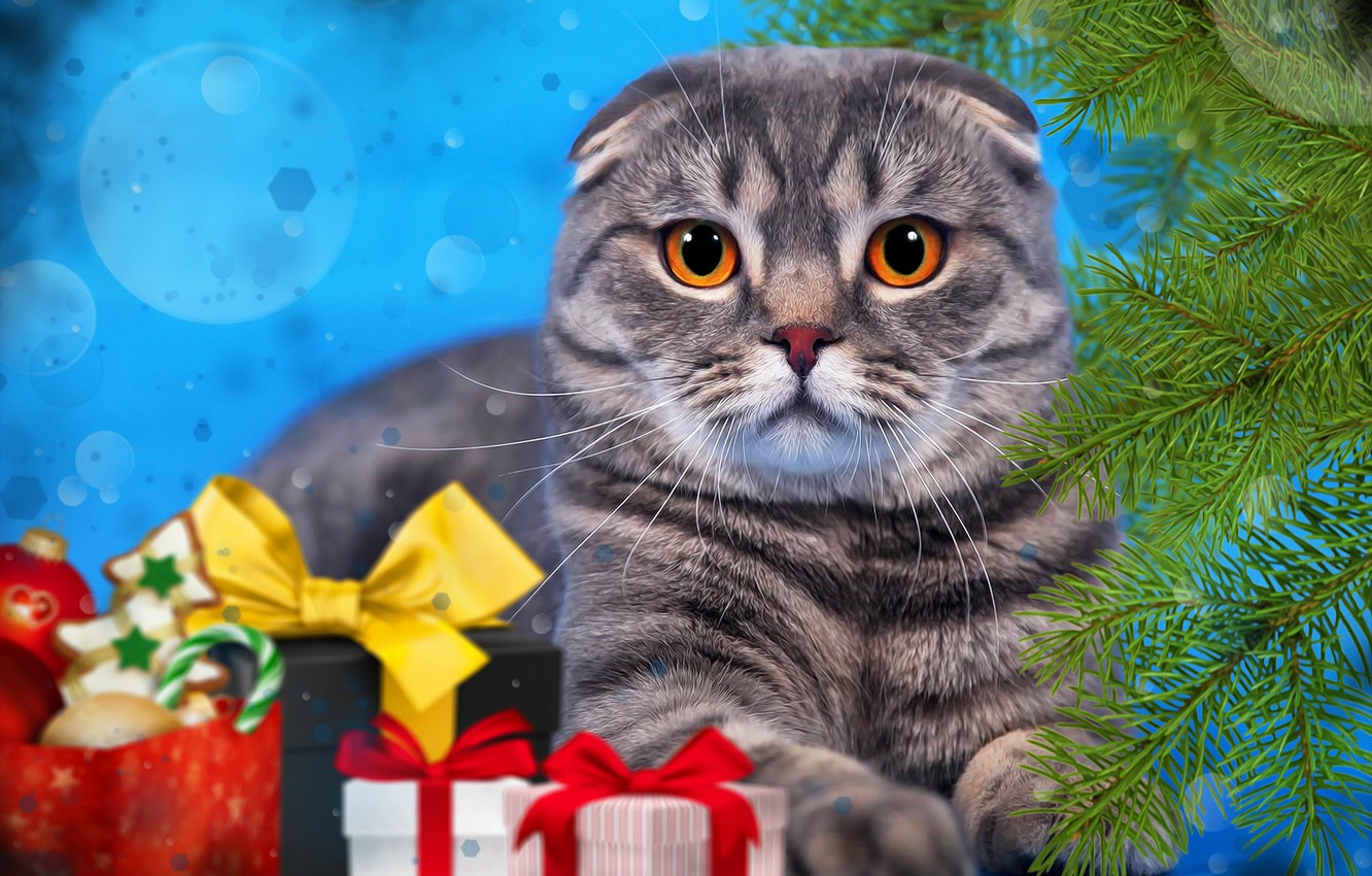 Photo wallpaper cat, cat, branches, background, new year, spruce, gifts