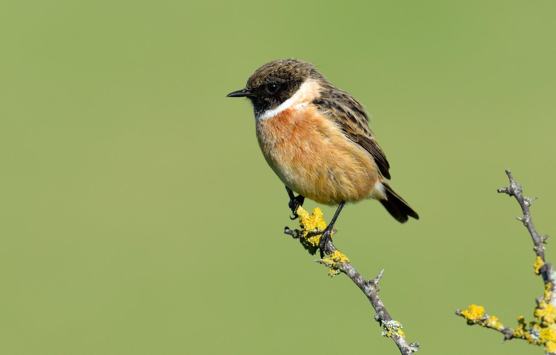 Photo wallpaper bird, branch, bird