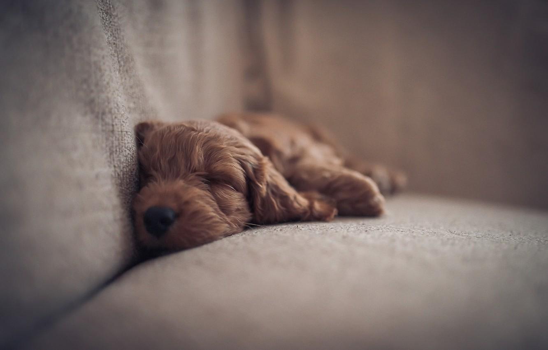 Photo wallpaper comfort, dog, puppy