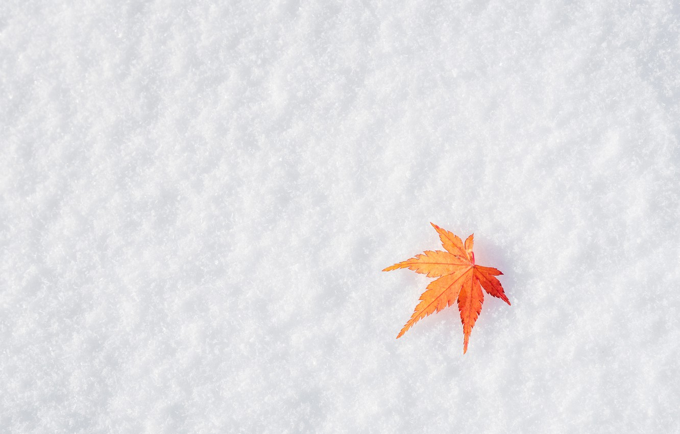 Photo wallpaper winter, autumn, leaves, snow, maple, winter, background, autumn, snow, leaves, maple