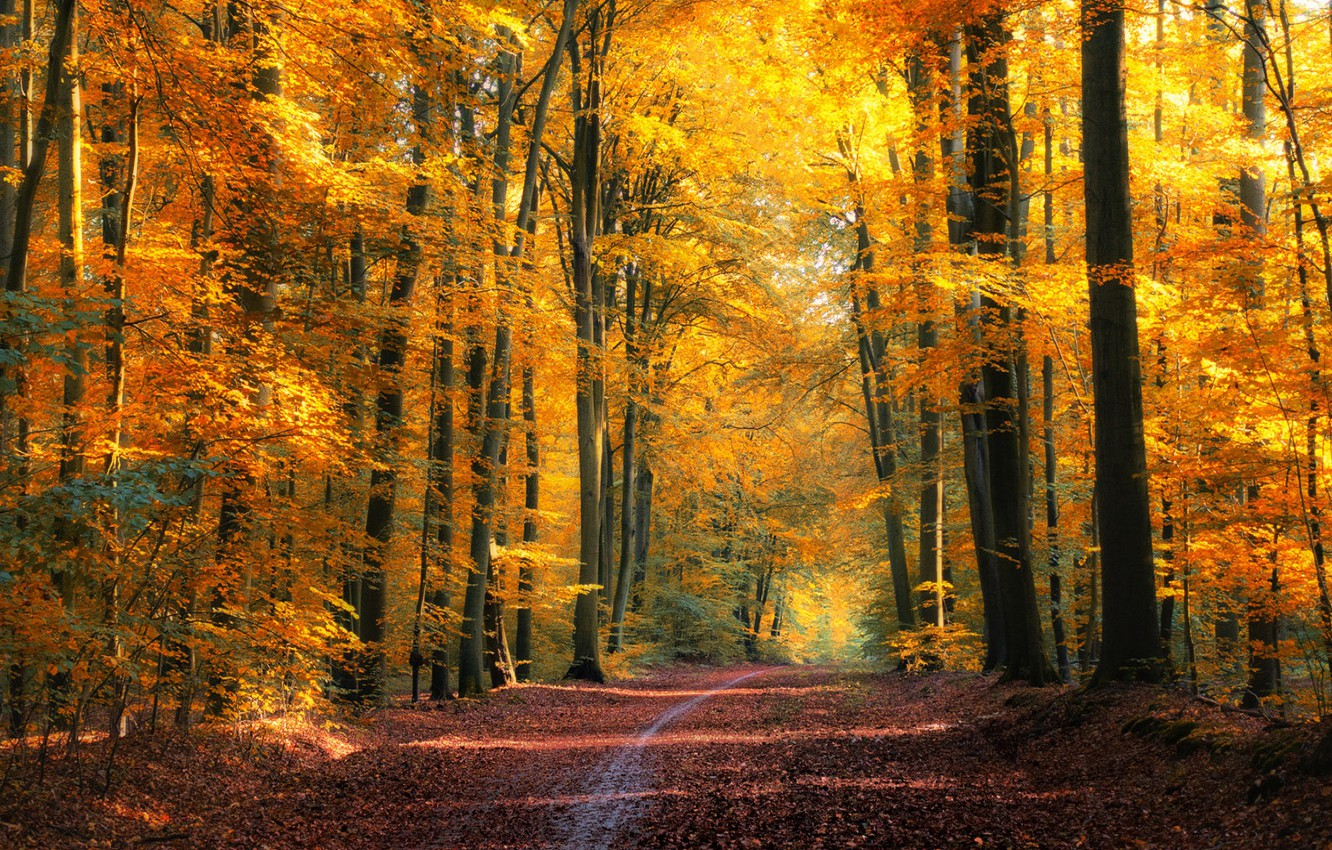 Photo wallpaper road, autumn, forest, foliage, OGP Brede
