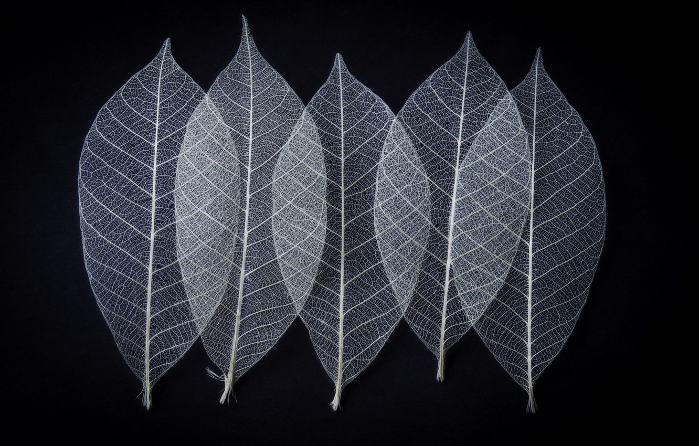 Photo wallpaper leaves, skeleton, veins