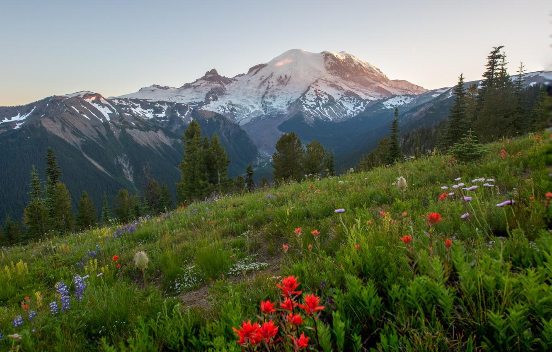 Photo wallpaper trees, landscape, flowers, mountains, nature, slope, USA, grass, national Park, National Park, Mount Rainier, Mount …