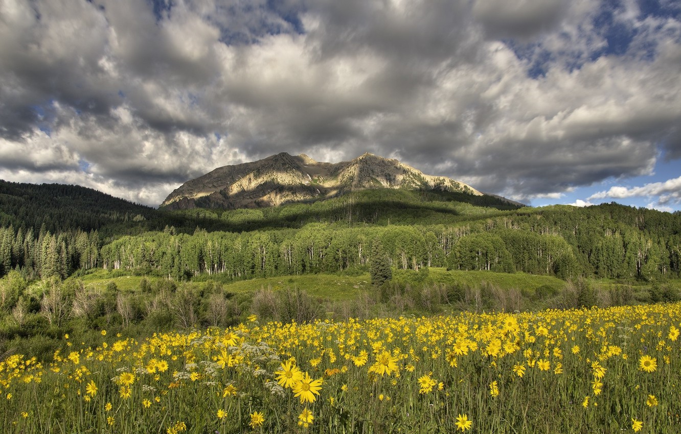 Photo wallpaper flowers, mountains, meadow, yellow