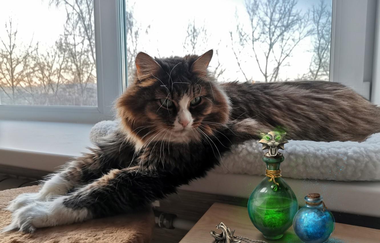 Photo wallpaper cat, cat, paws, window, bottles, on the windowsill, cat