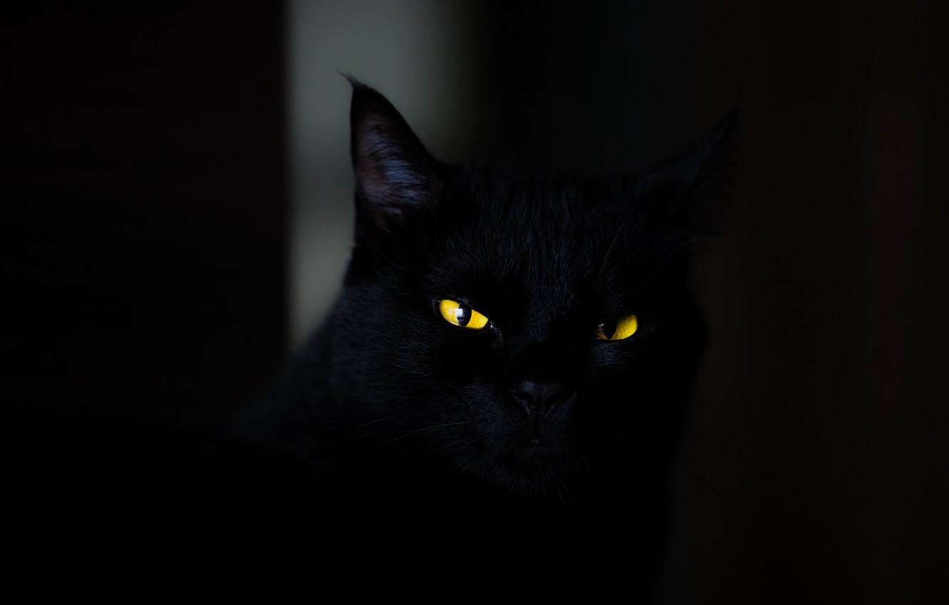 Wallpaper Dark Animals Eyes Cat Cats Look Yellow Eyes Spooky Black Wallpaper Stare 4k Ultra Hd Background Striking Eyes Images For Desktop Section Koshki Download