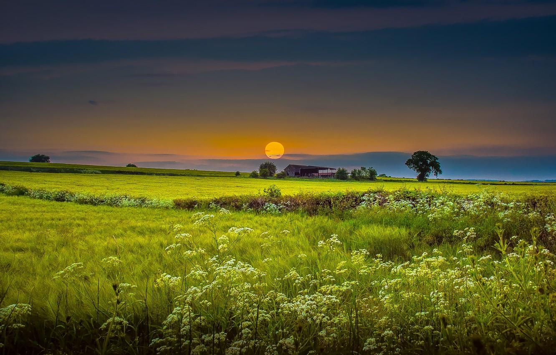 Photo wallpaper field, the sky, grass, house, photo