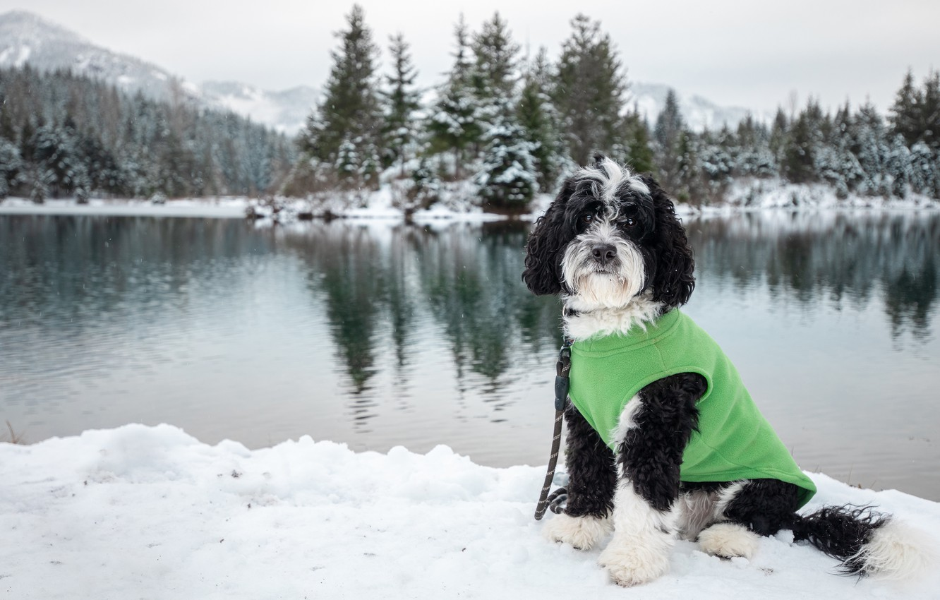 Photo wallpaper winter, forest, snow, mountains, reflection, black and white, shore, dog, ate, leash, blouse, sitting, green, …