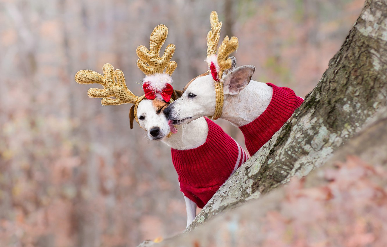 Photo wallpaper language, dogs, red, nature, style, background, tree, mood, pen, holiday, clothing, two, Christmas, pair, costume, …