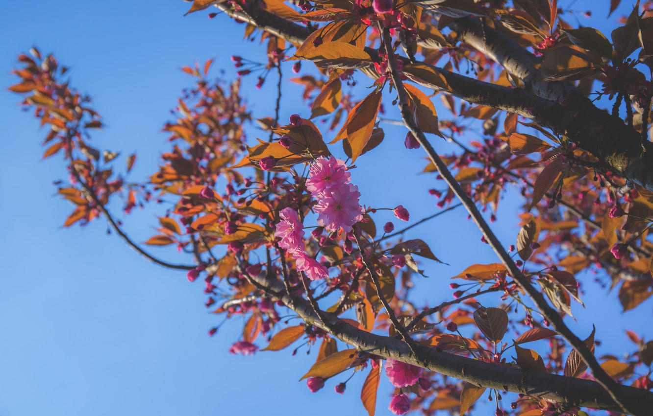 Photo wallpaper Flowers, The sky, Nature, Spring, Flower, Leaves, Plant, Branch, Branches, Plants, Nature, Sky, Flower, Flowers, …