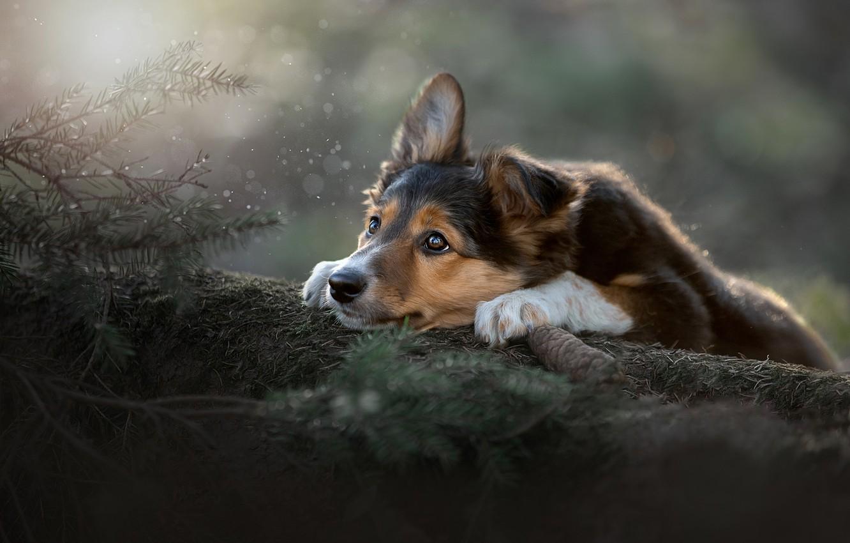 Photo wallpaper look, branches, mood, dog, face, bump, Svetlana Pisareva