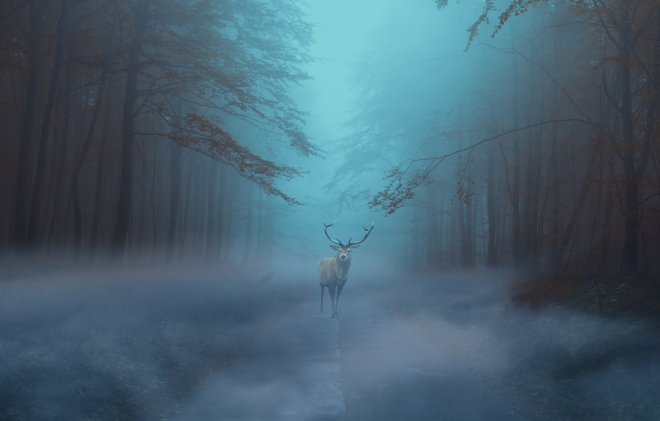 Photo wallpaper road, autumn, forest, fog, deer, morning, twilight